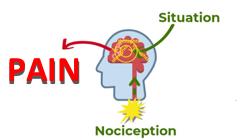 Pain - Situation - Nociception